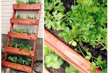 CREATIVE GARDEN IDEAS / by Rachel @ Sprinkle Some Fun