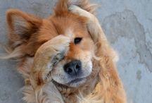 Dogs  / by Carman Polsinelli