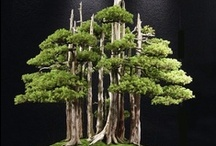 Bonsai Tree Art... / by Bill Shattuck