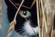 Black & B&W Cats / by Jan Suggs