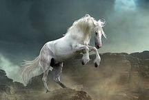 Horses / I NEED..... / by CAROL Cassel