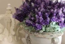 All things Lavender / Welcome to my boards. Pin whatever inspires you.....no pin limits!!!!!