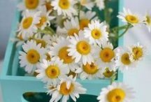 The Daisy Chain / Welcome to my boards. Pin whatever inspires you.....no pin limits!!!!!