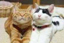 - Kitties, Unite! -