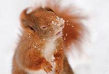 WereSquirrel