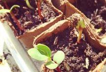 Tips for growing stuff / Gardening, growing, germinating...