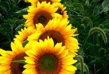 Doğa, Çiçek / Doğa, Çiçek