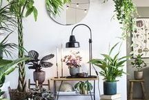 Urban Jungle: Plants & Green Spaces / Moodboard dedicated to green spaces, plants, pots, vases and all kinds of greens. Get inspired by succulents, spathiphyllum, mimosa, cactus, tillandsia, orchids, hanging plants, aspidistra, nephrolepis, sword fern, fiddle-leaf fig, passionflower, ivy, kalanchoe, asparagus fern, yucca palm and other greens.