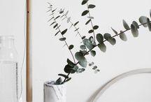 Eukalyptus:Decoration / Stil, Trend, Pflanzen, Natur, Dekoration, puristisch, einrichten,
