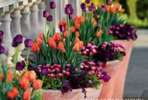 flowers of Amsterdam / Tulips, Daffodils, Hyacinths, Crocus, spring garden, city, urban, patio gardening, container planting.
