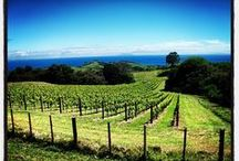 Waiheke Vineyards / Waiheke Island, home to world class producers of wine.