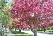 Spring - Grand Forks
