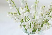 For my white garden
