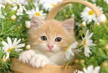 Kitty..Kitty..