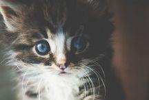 Petits chats et autres petits animaux