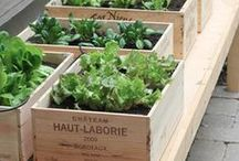 Plants and Garden / Deco ideas DIY greenery hanging pallets