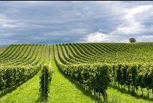 Agricolture / Agricoltura, Allevamenti, Ambiente