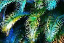 Jungle S/S 17 - Moodboard