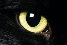 """Black Cats Love Gallery / """"When a man loves cats, I am his friend and comrade without further introduction"""" - Mark Twain"""