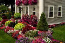 Fab Gardens/Backyards / by K Boniello