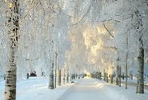 Snow, Snow, Snow / by K Boniello