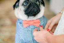 Pugs <3 / by Carrot R