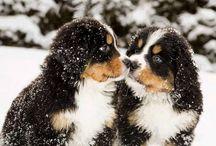 Berners / Best Pets / by K Boniello