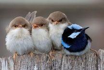 Birds of a Feather / by K Boniello
