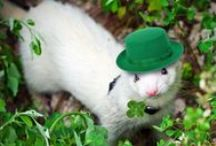 Happy St Patrick's day / Just cute things... in green #cute #optrafair #stpatricksday