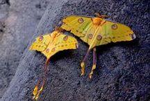 moths & butterflies