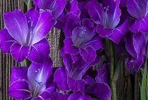 The color purple!!!! / P-u-r-p-l-e
