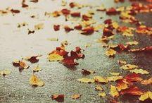 Step into Autumn...