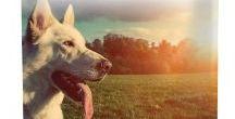 Health Extension Dry Dog Food / Holistic Health Extension Dry Dog Food. 100% natural and made in the USA!