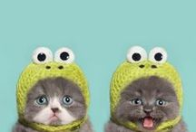 Hilarious Pets / Try not to crack a smile while looking through these hilariously adorable pets from Health Extension Pet Care