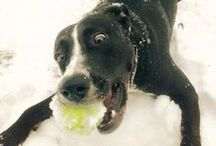 Winter Wonderland (for Pets!) / Adorable dogs, cats and more enjoying the snow