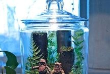 Terrariums / Little ecosystems