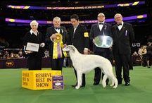 Westminster Kennel Club Dog Show 2016 / Photos from the 2016 Westminster Kennel Club Dog Show