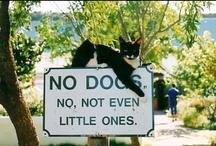 gatos :) / eles olham dentro de nossas almas.Isso vicia