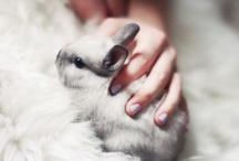 Honey Bunny / best pets