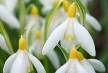Flowers - Yellow or white / by Barbara