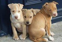Doggies* Mutts & Pups / by Shigemi