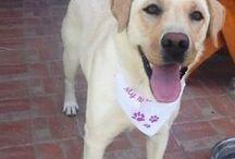 Bol-Dog kutyusok :)  /Happy Dogs with Bol-Dog products/ / Képek olyan kutyusokról, akik már valamilyen egyedi terméket kaptak gazdájuktól Tőlünk!