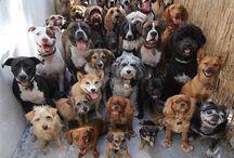 042. Honden / Dogs