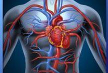 Medical, ABCDE: Circulation / Circulatie / Hieronder valt het beoordelen van de bloedsomloop en de handelingen die de bloedsomloop ondersteunen. Belangrijk daarbij is de bloeddruk en de pols, gelet op frequentie, volume en regelmaat. Oorzaken kunnen zijn: hartritmestoornissen, hartfalen, hartstilstand, shock, afknelling en ernstige bloedingen.