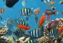 Animals, Aquariumideeën