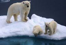 Nature, Arctic