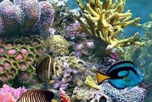 Nature, Onder Water / Underwater
