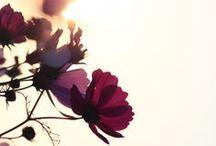 •Blumen•