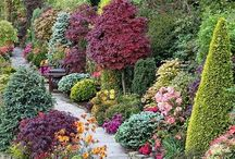 Gardens and Pots