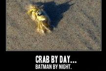 Odd/Funny Pictures
